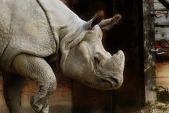 Rinoceronte Fotografía de archivo libre de regalías