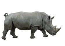 Rinoceronte Foto de Stock