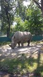 rinoceronte Zdjęcia Royalty Free