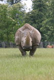 Rinoceronte Fotografía de archivo