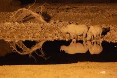 Rinoceronte ad un waterhole nella notte - sosta di Etosha Fotografie Stock