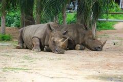 Rinoceronte africano Imagenes de archivo