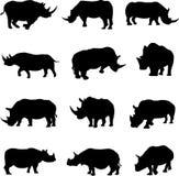 Rinoceronte africano e rinoceronte asiatico Fotografie Stock