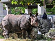 Rinoceronte asiático Foto de archivo libre de regalías