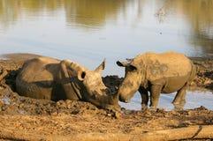 Animali africani del sud Fotografie Stock Libere da Diritti