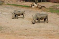 Rinoceronte branco no jardim zoológico foto de stock