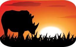 Rinoceronte con il tramonto Fotografia Stock