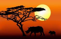 Rinoceronte con la siluetta del vitello Fotografie Stock
