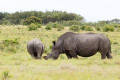 Rinoceronte con suo allontanarsi del bambino Immagini Stock Libere da Diritti