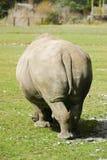 Rinoceronte de detrás Imágenes de archivo libres de regalías