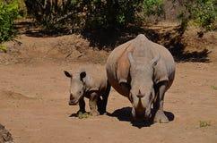 Rinoceronte del bambino e della madre Fotografie Stock