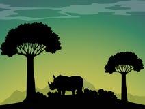 Rinoceronte della siluetta nel campo Fotografia Stock