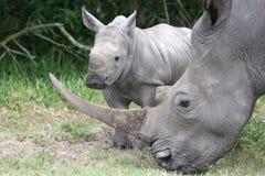 Rinoceronte e madre del bambino Immagini Stock