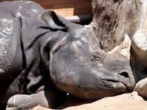 Rinoceronte el dormir fotos de archivo