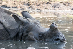 Rinoceronte em Tierpark Berlim Foto de Stock