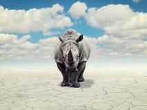 Rinoceronte em um deserto Fotos de Stock Royalty Free
