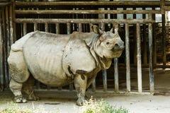 Rinoceronte en el chiamgmai Tailandia del parque zoológico del chiangmai Fotos de archivo libres de regalías