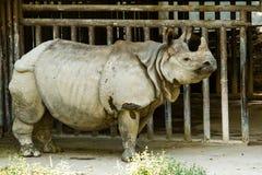 Rinoceronte en el chiamgmai Tailandia del parque zoológico del chiangmai Fotos de archivo