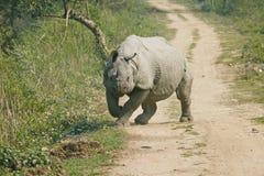 Ataque del rinoceronte Imagen de archivo