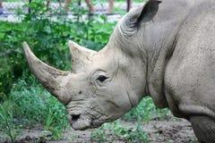 Rinoceronte en el parque zoológico de Omaha imagenes de archivo