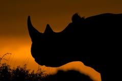 Rinoceronte en la puesta del sol Foto de archivo libre de regalías