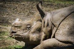 Rinoceronte en la tierra fotografía de archivo libre de regalías