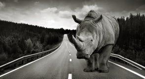 Rinoceronte enorme sul modo dell'asfalto Fotografia Stock Libera da Diritti