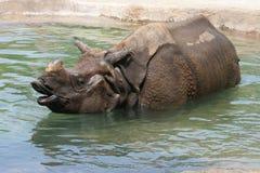 Rinoceronte indiano Immagini Stock Libere da Diritti