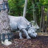 Rinoceronte indiano dietro un albero in specie in pericolo di estinzione rara di un paesaggio della foresta immagine stock