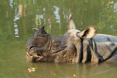 Rinoceronte indio Foto de archivo