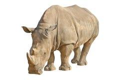 Rinoceronte isolato su bianco con il percorso di ritaglio Fotografia Stock Libera da Diritti