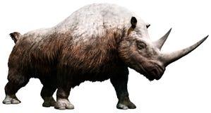 Rinoceronte lanoso Fotos de archivo libres de regalías