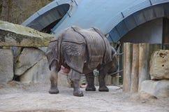 Rinoceronte masculino en el parque zoológico Fotografía de archivo libre de regalías