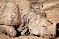 Rinoceronte negro imagenes de archivo