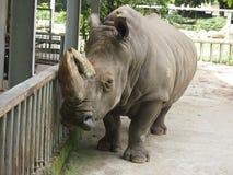 Rinoceronte nello zoo Immagini Stock