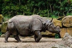 Rinoceronte no jardim zoológico Foto de Stock