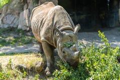 Rinoceronte no jardim zoológico Fotografia de Stock Royalty Free