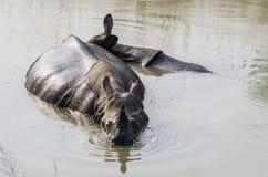 Rinoceronte que se refresca apagado Foto de archivo libre de regalías