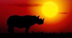 rinoceronte sul tramonto Fotografie Stock Libere da Diritti