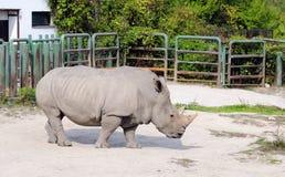 Rinoceronte in uno zoo Fotografie Stock Libere da Diritti