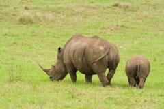Rinoceronte y bebé Foto de archivo libre de regalías