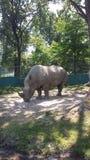 Rinoceronte Royalty Free Stock Photos