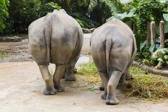 rinocerontes Fotos de archivo