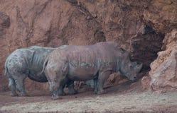 Rinocerontes en el parque natural de España septentrional imagenes de archivo