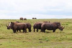 Rinocerontes grandes em África Foto de Stock Royalty Free