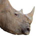 Rinoceros. Stock Afbeelding