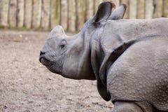 rinoceros Royalty-vrije Stock Foto's