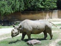 Rinoceros bij Dierentuin Stock Afbeeldingen
