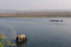 Rinoceros bij ontbijt in de Rapti-Rivier in de wildernissen van Nepal Landschap met Aziatische rinoceros in Chitwan, Nepal royalty-vrije stock foto's