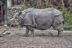 Rinoceros in de dierentuin Royalty-vrije Stock Afbeeldingen